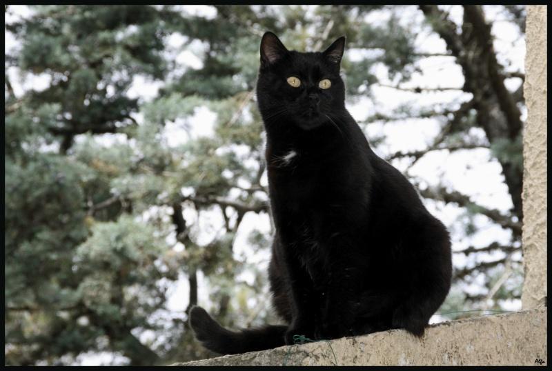 My cat 06
