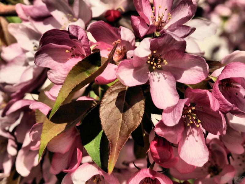 Spring New