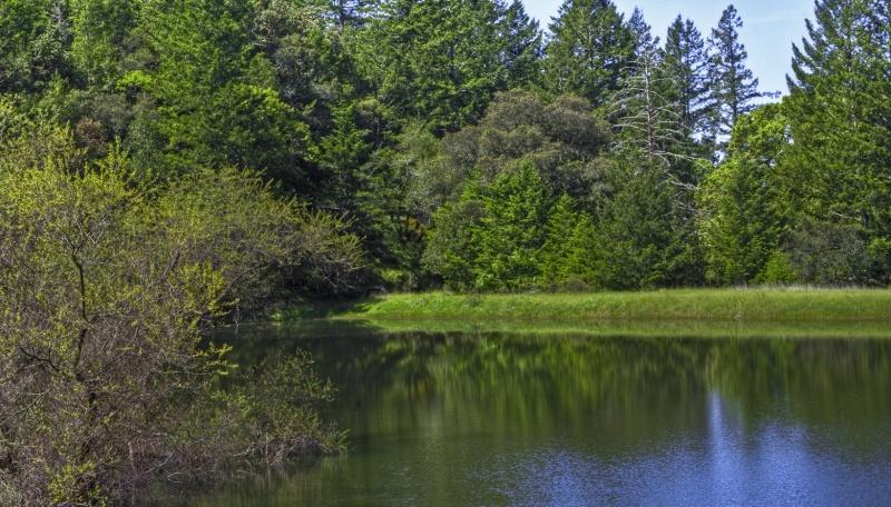 Merganzer Pond