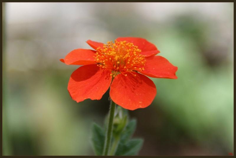 My garden 06