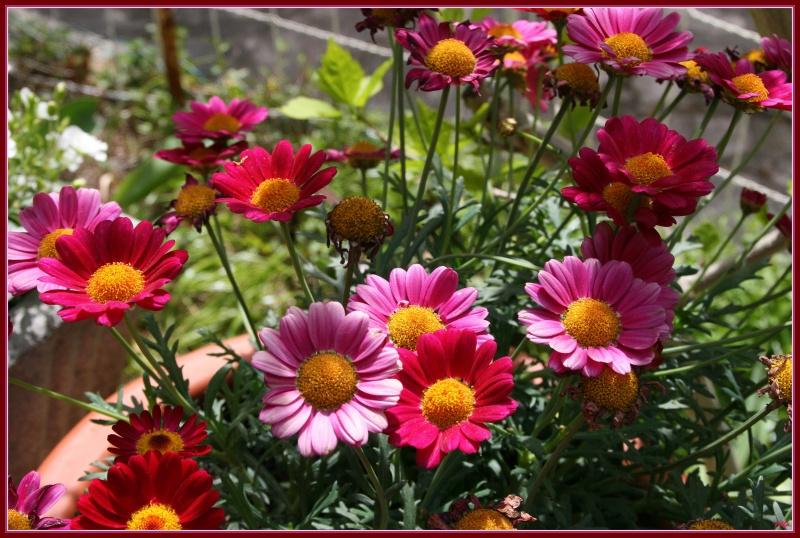 My garden 07