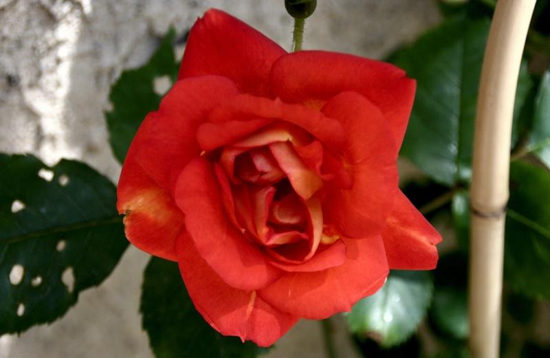 My garden 08