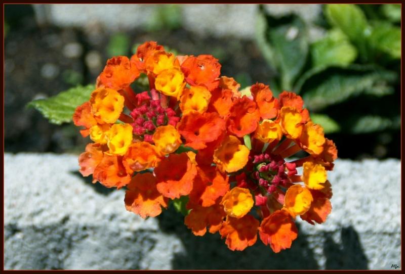 My garden 09