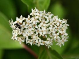 Ant Flowers
