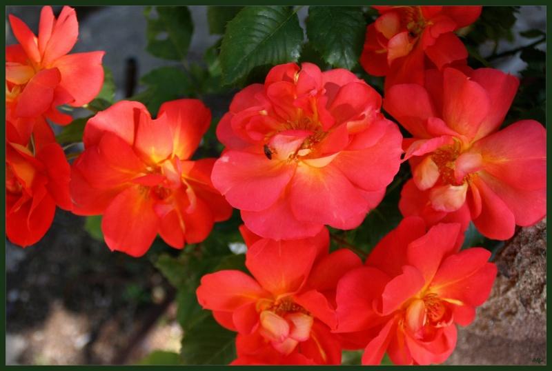My garden 14