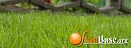 FB Grass