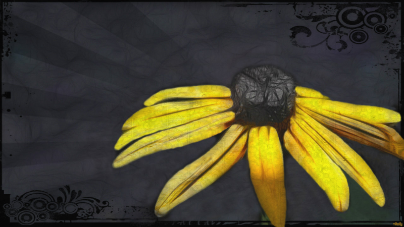 Sunflower Dark