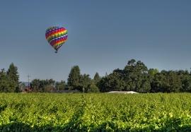 Sonoma Co Vineyards