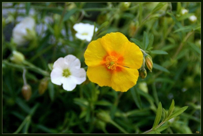 My garden 18