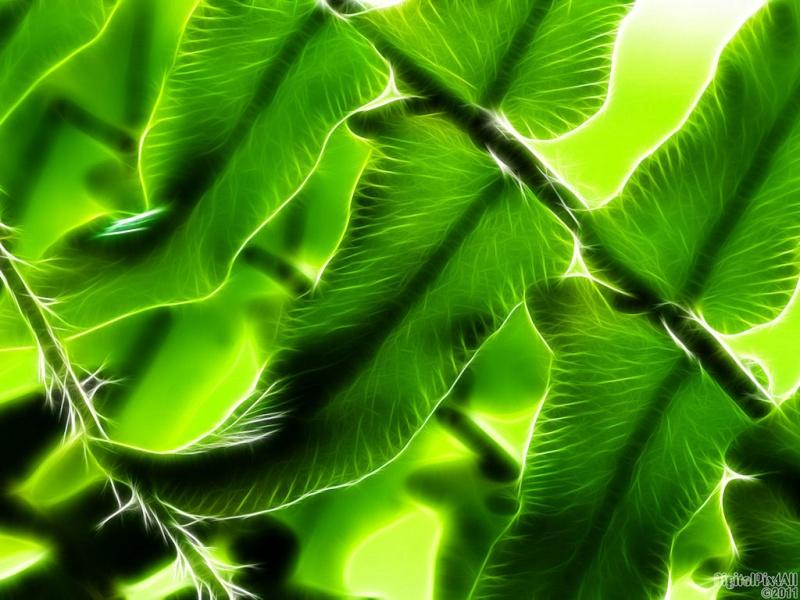Wispy Green