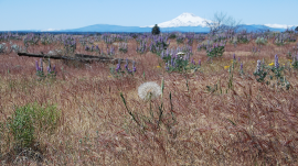 Oregons High Desert