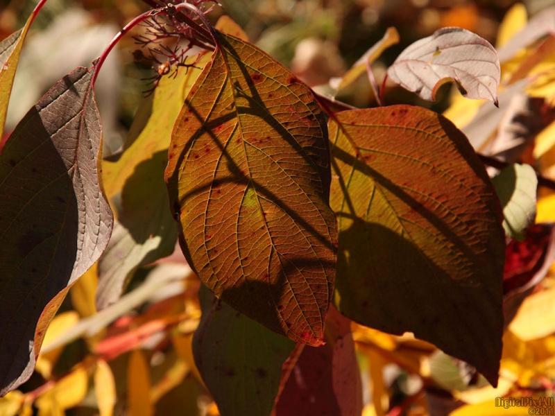Leafutaries