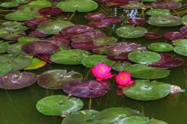 Lotusland.......