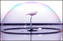 Bubble drop_II