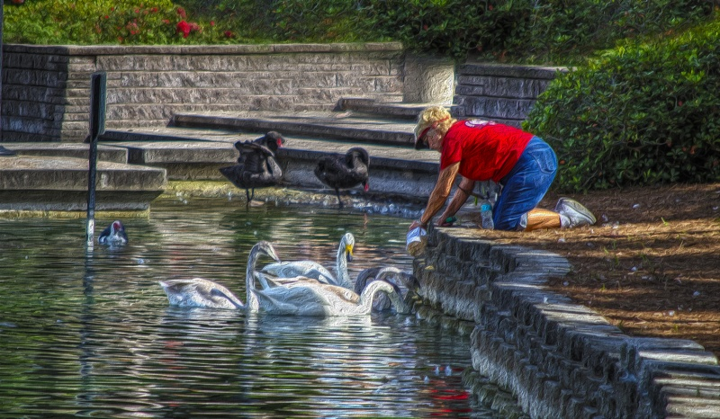 Woman Feeding Swans