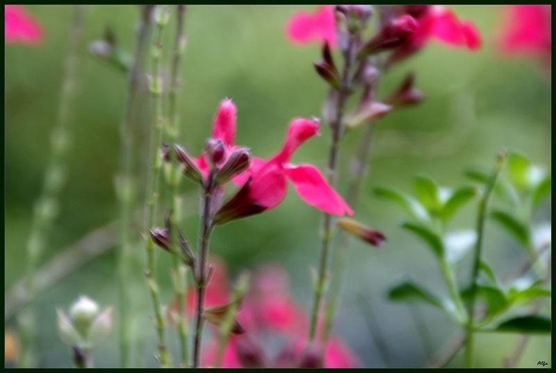 Flower 22