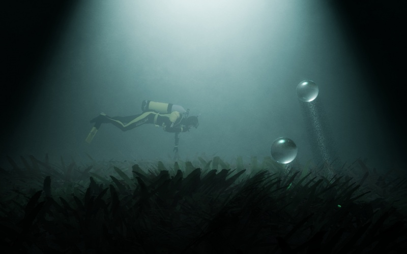Diving at Night