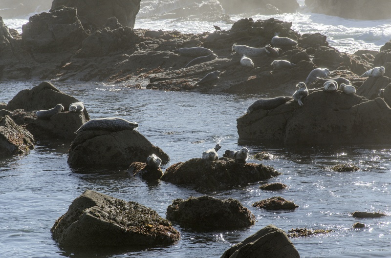 Seals On Salt Point