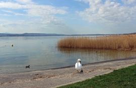 Lake 53