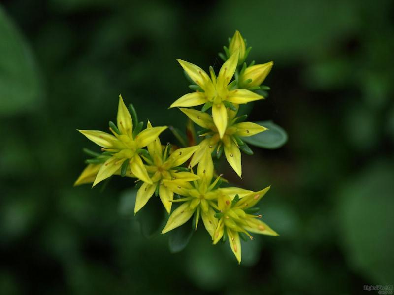 Tiny Blossoms
