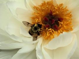 Posy Bee