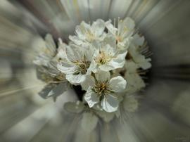 Flowerets