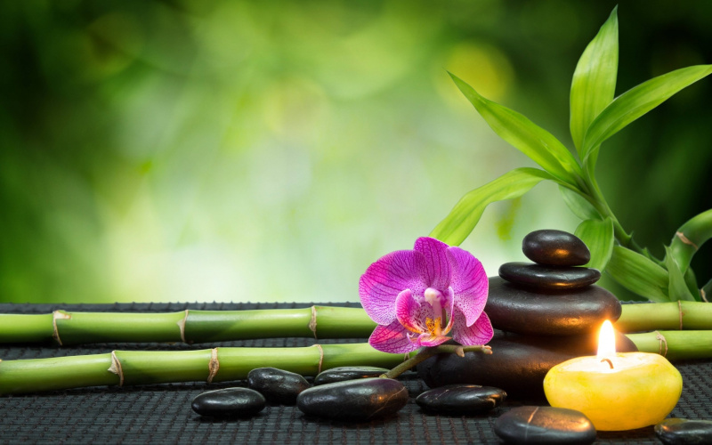 Body to Body Massage Centre in Nehru Place
