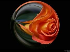 Roseball