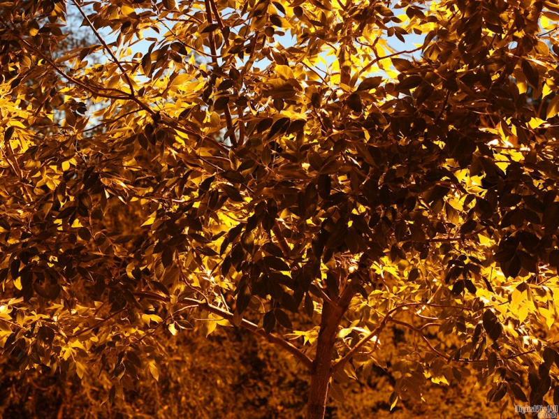 Sun Leaves