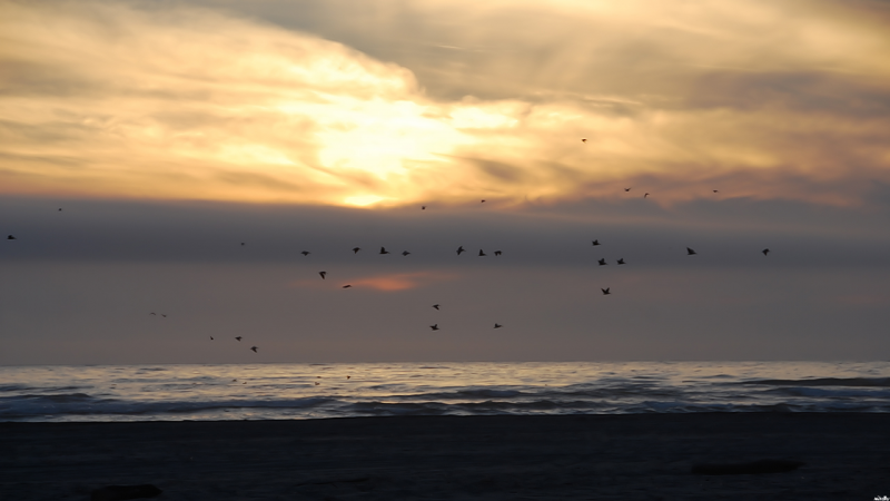 Sunset,Pelicans and Surf
