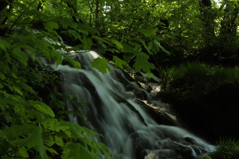 Malanaphy Springs 5-29-13