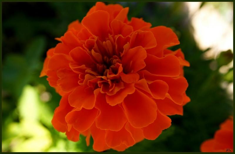 My garden34