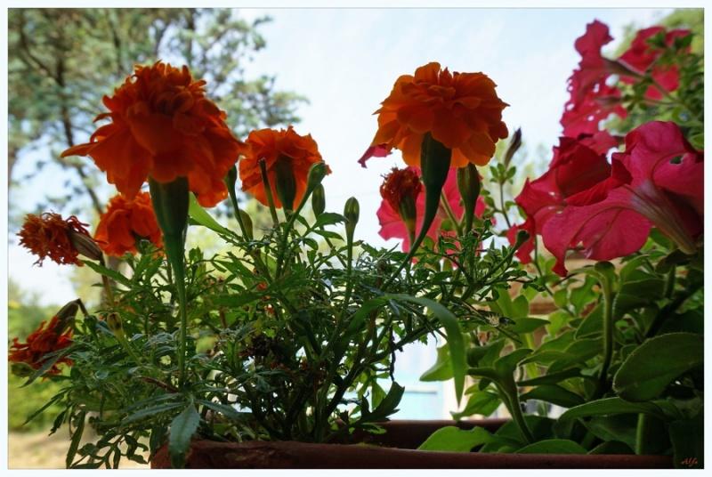 My garden 43