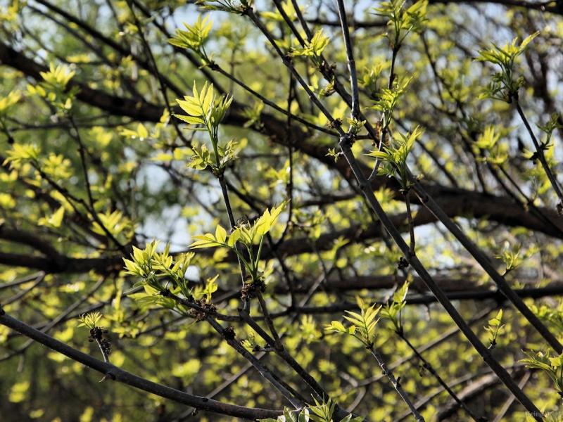 Leafy Limbs