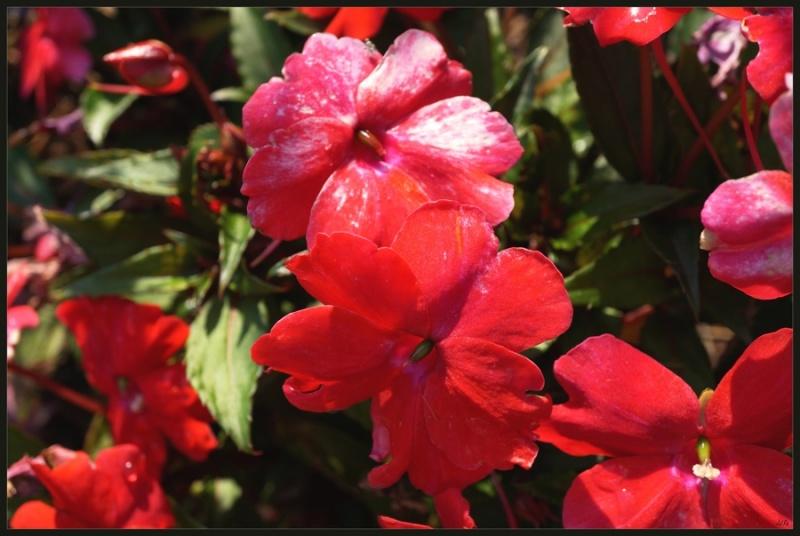 My garden 55