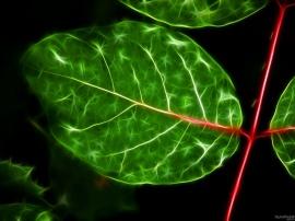 Sparkle Leaf