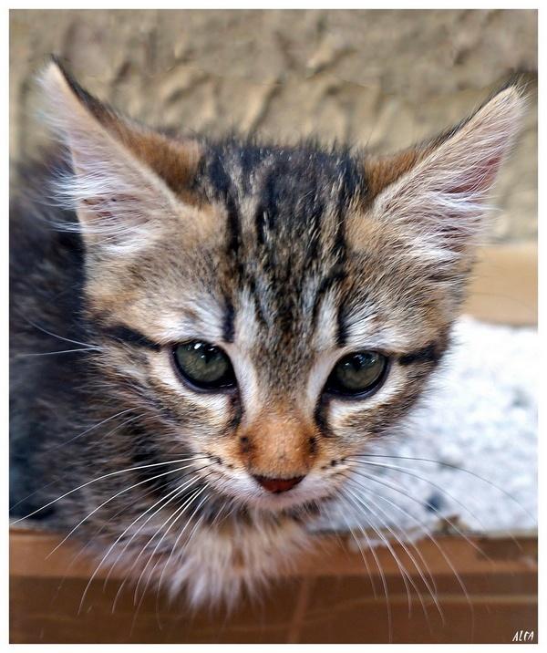 My cat 07
