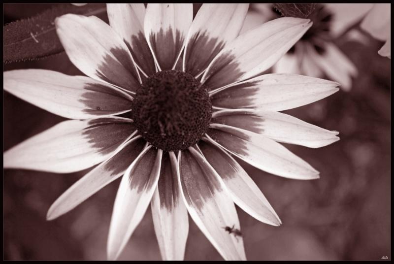 Flower 30