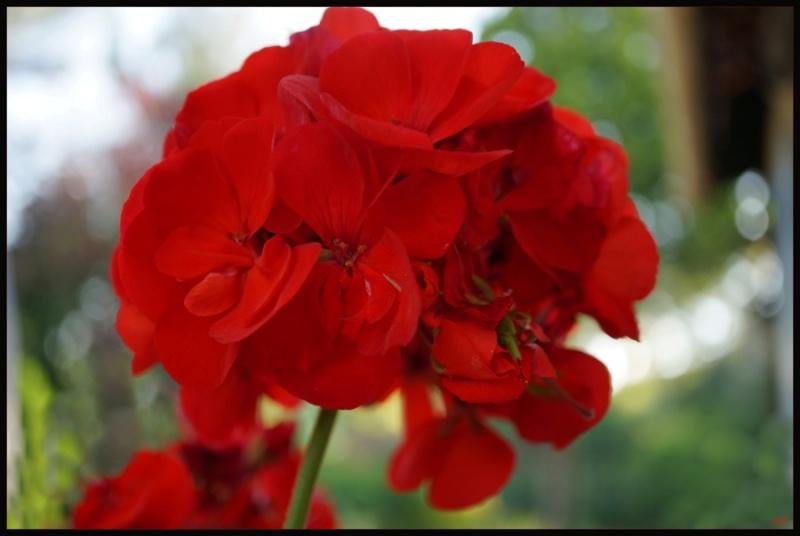 My garden 66