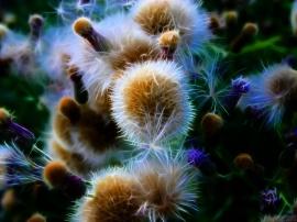 Fluffy