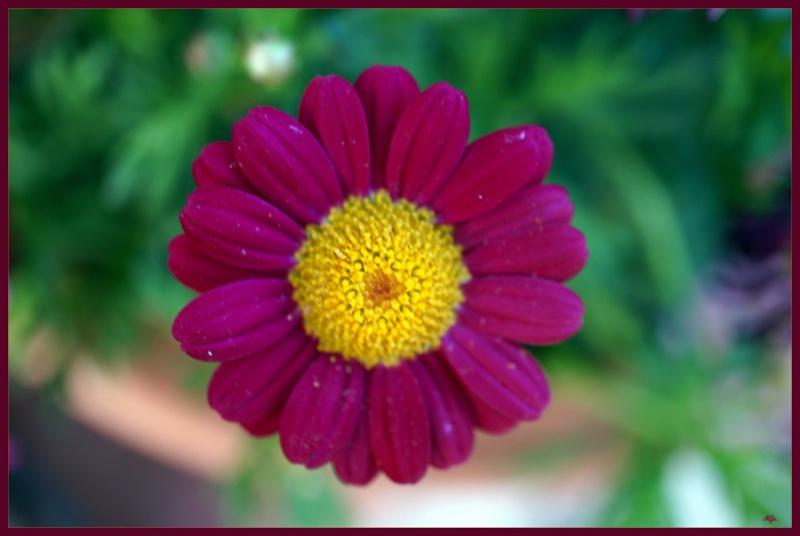 My garden 88