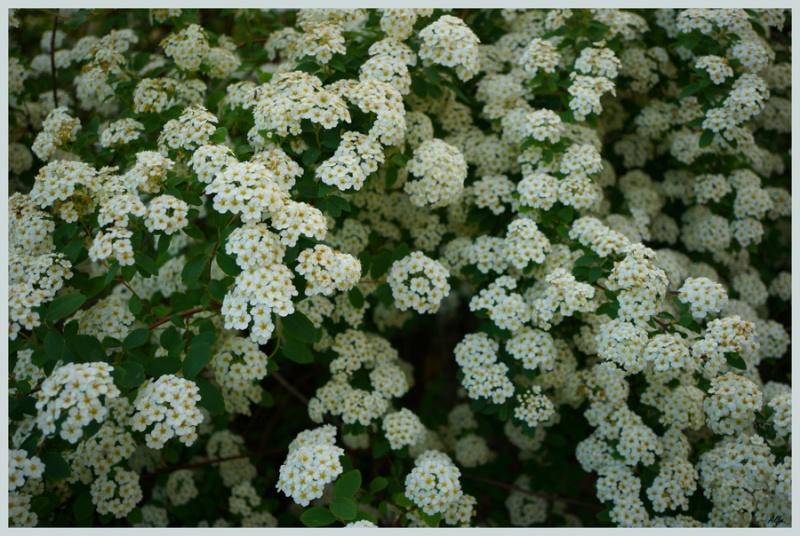 My garden 84