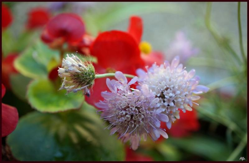 my garden 96