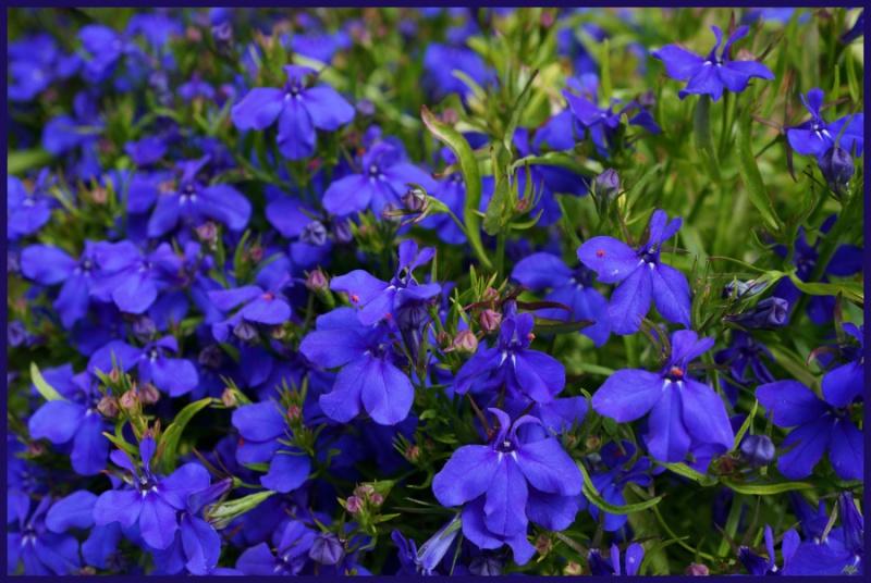 My garden 90