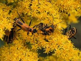 Bug Huddle