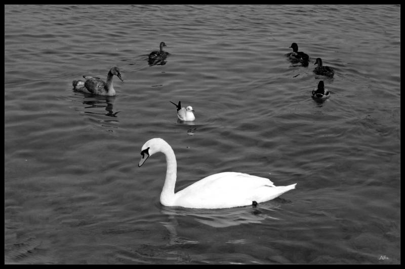 Lake_50
